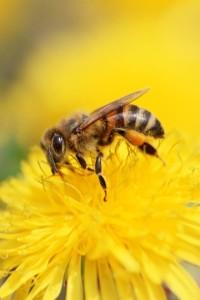 skupljanje polena