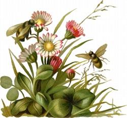 pčele su dar prirode